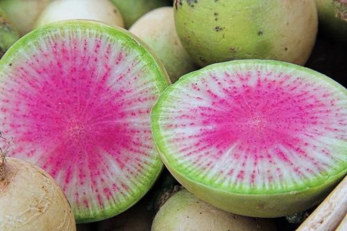 Watermelonradish2