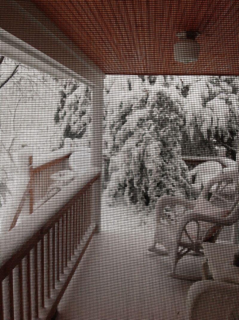 Snow20132