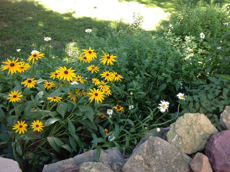 Flowerbed1
