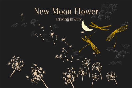 Moonflowerboxproduct1