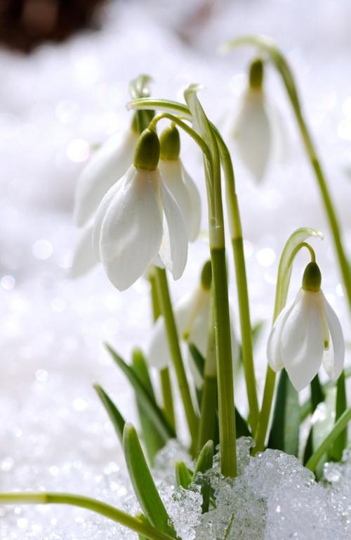 Winterflower1