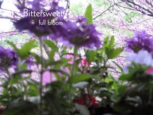 Full_bloom