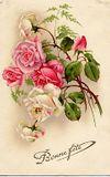 246_flowerws554
